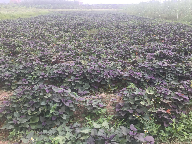 """项目一:农田上的风景——""""最美田舍"""" 这个项目从本质上说是一个农文"""